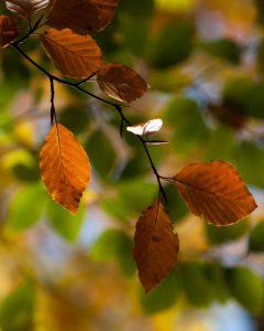 Efterårsfarver i naturen