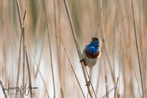 Foredrag om fuglefotografering med Erik Borch