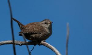 Fuglefotografering. @ Det Bruunske Pakhus